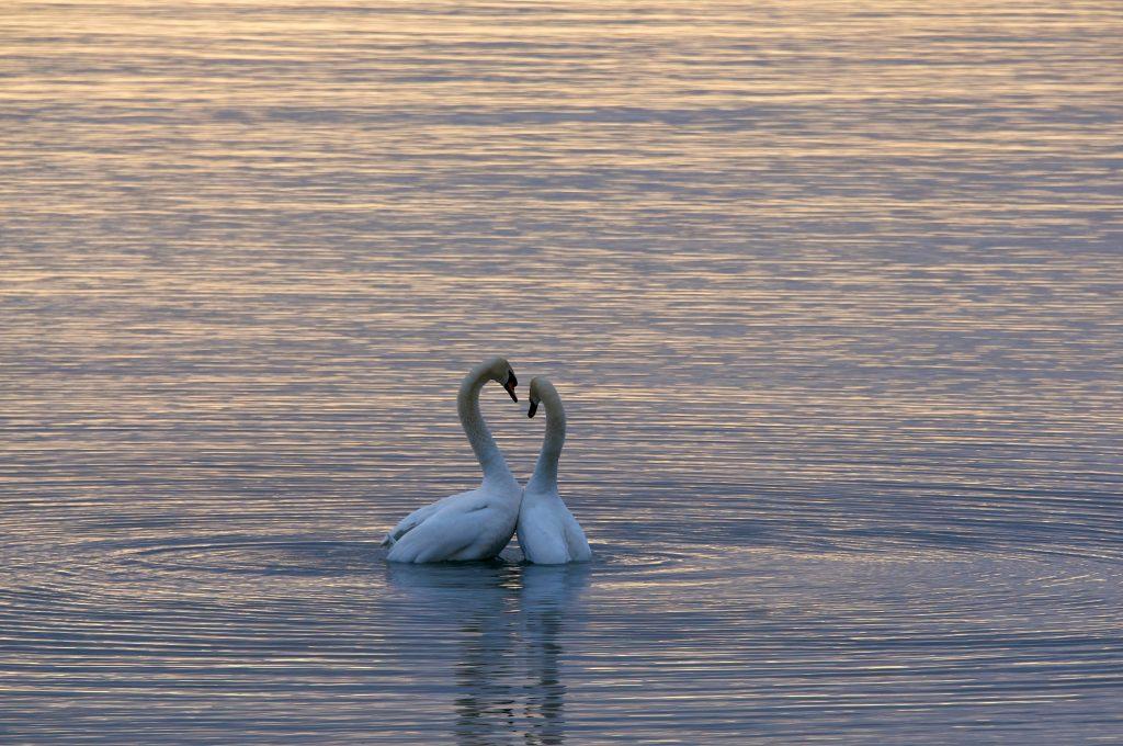 zelfliefde cursus mindfulness